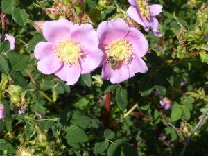 Easter in the Rose Garden 066