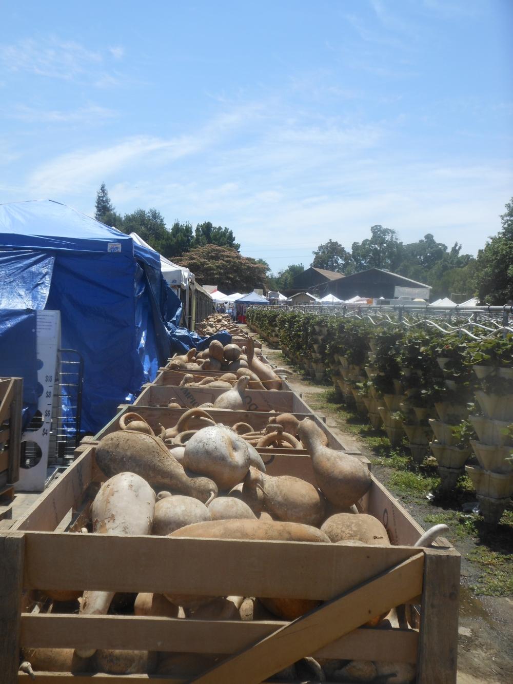 corn festival 066