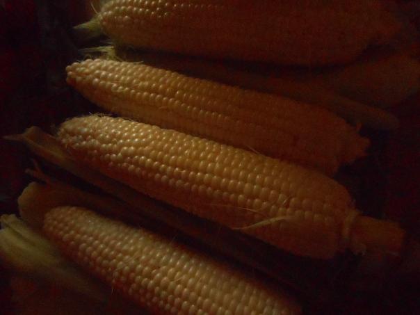 corn festival 073