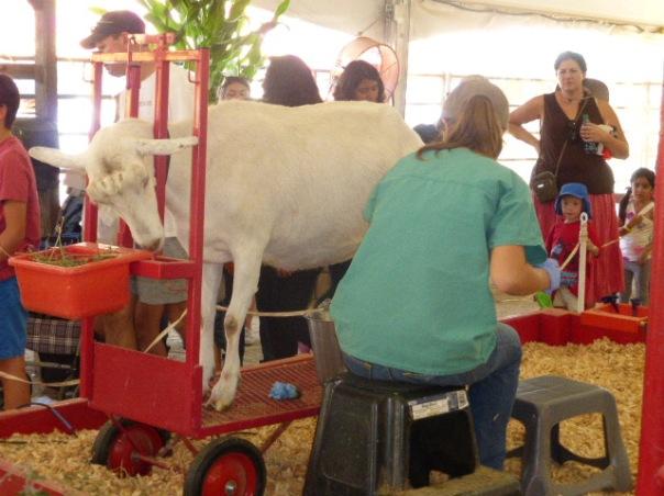 State Fair 050